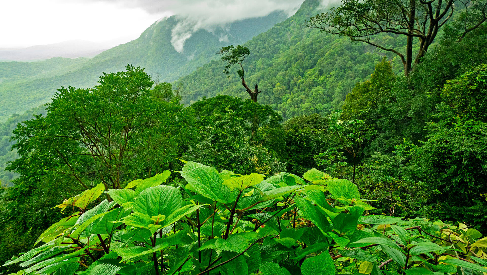 A Secret Forest: The Hidden Lives of Agumbe