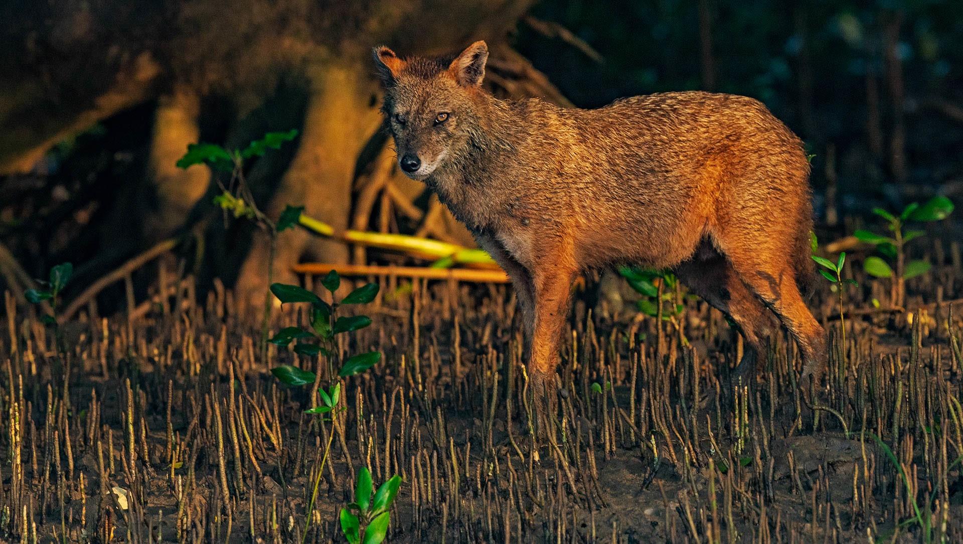 Mangrove Coast: The Emerald Forests of Coringa Wildlife Sanctuary