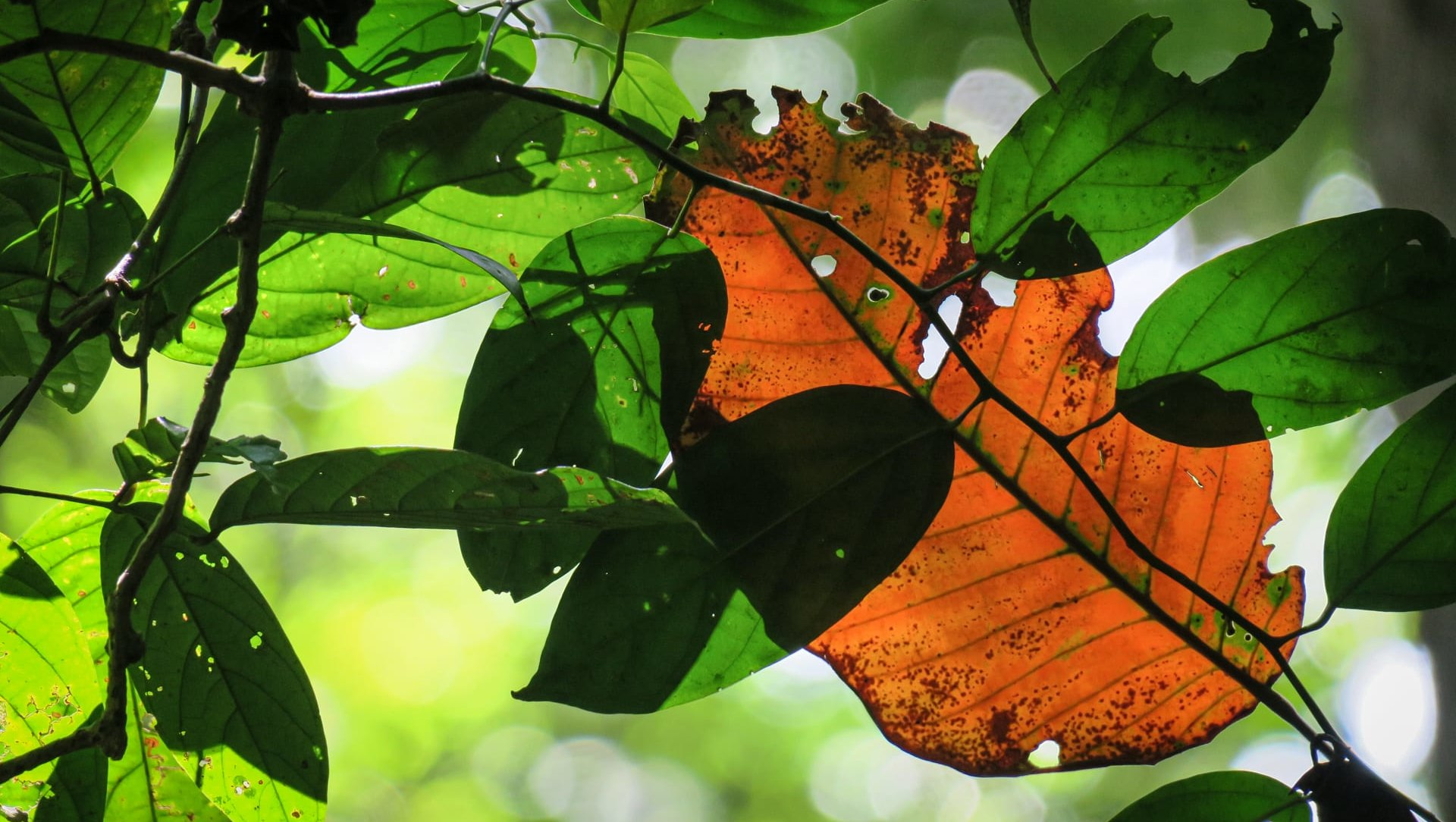 The Art of Dying: Senescence in Leaves