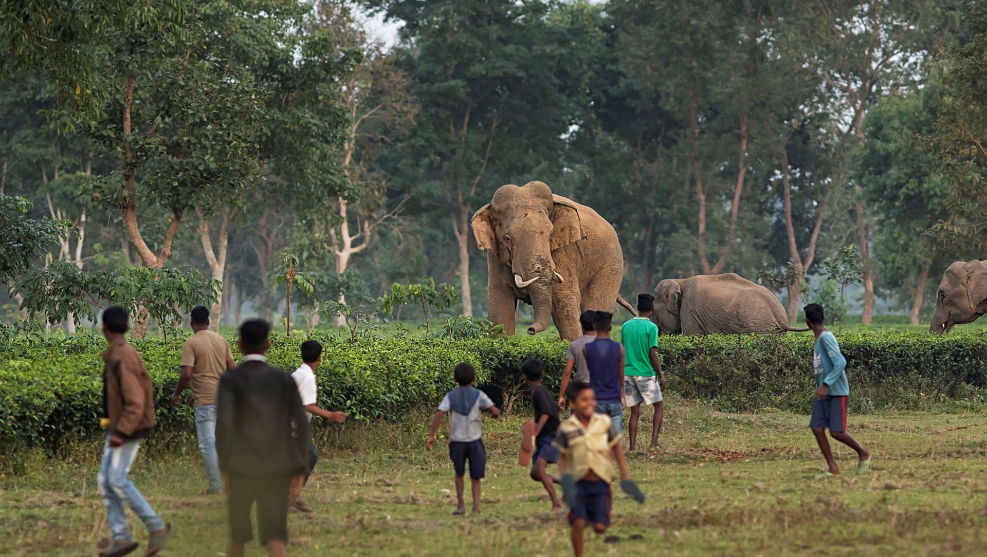Learning to Coexist with Elephants