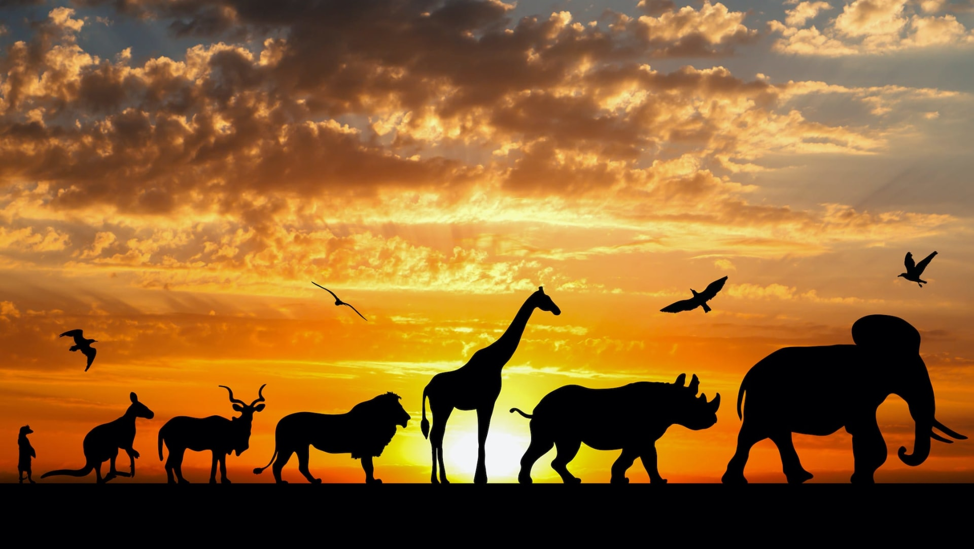 Eternal life or a single day: Guess the lifespans of these wild creatures