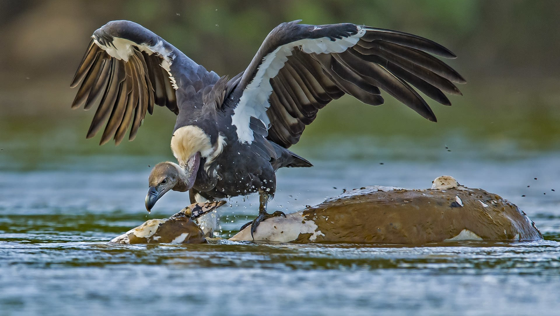 The Good Death Eaters: How Scavengers Keep the Ecosystem Clean