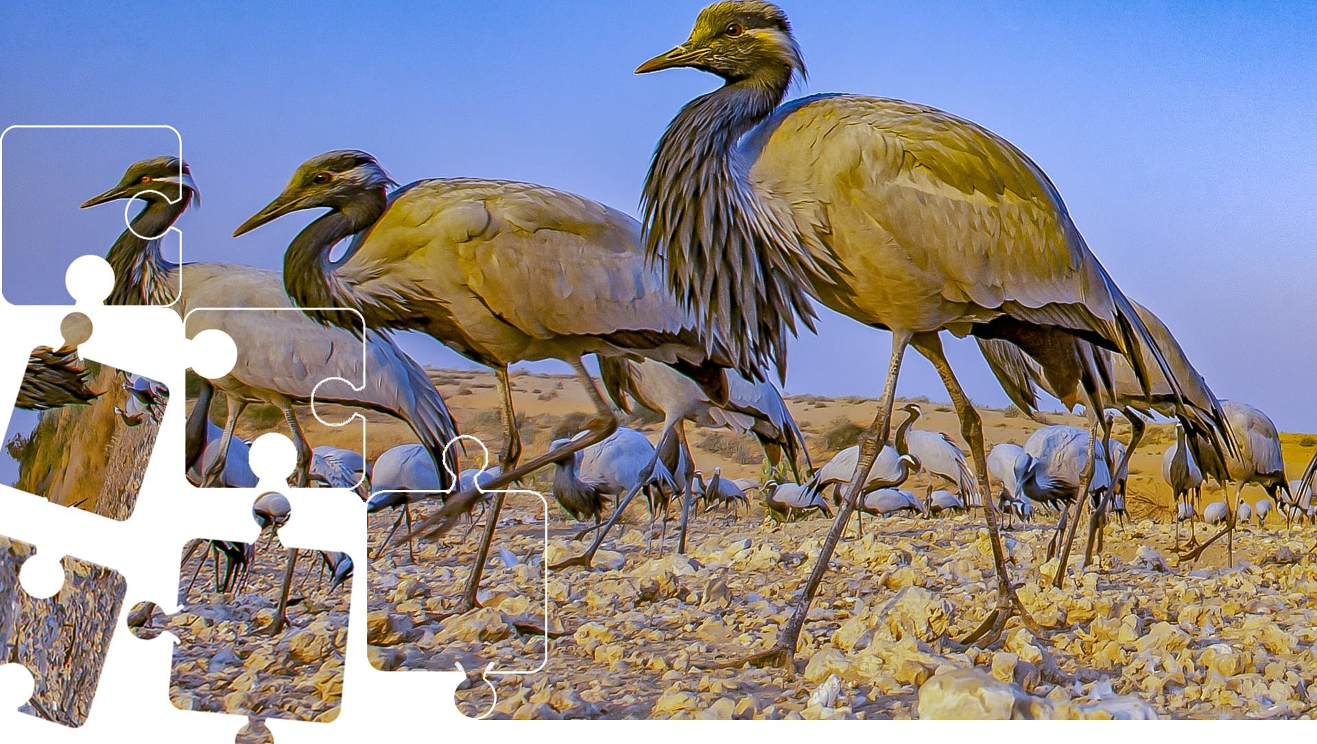 Wildlife Puzzle: The Elegant Visitors of Kheechan