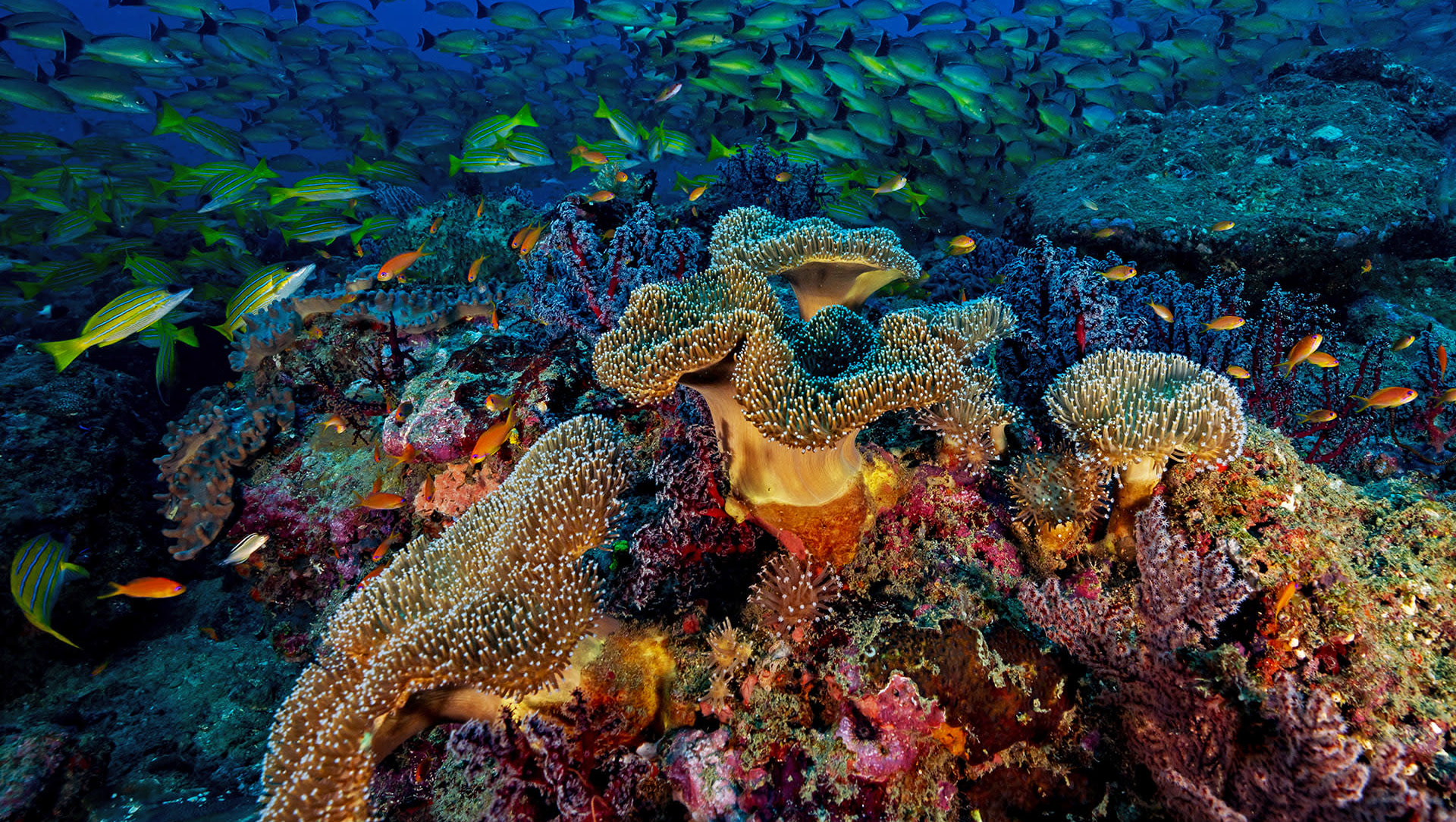 Coral Reefs of India: What Makes them Important Ecosystems