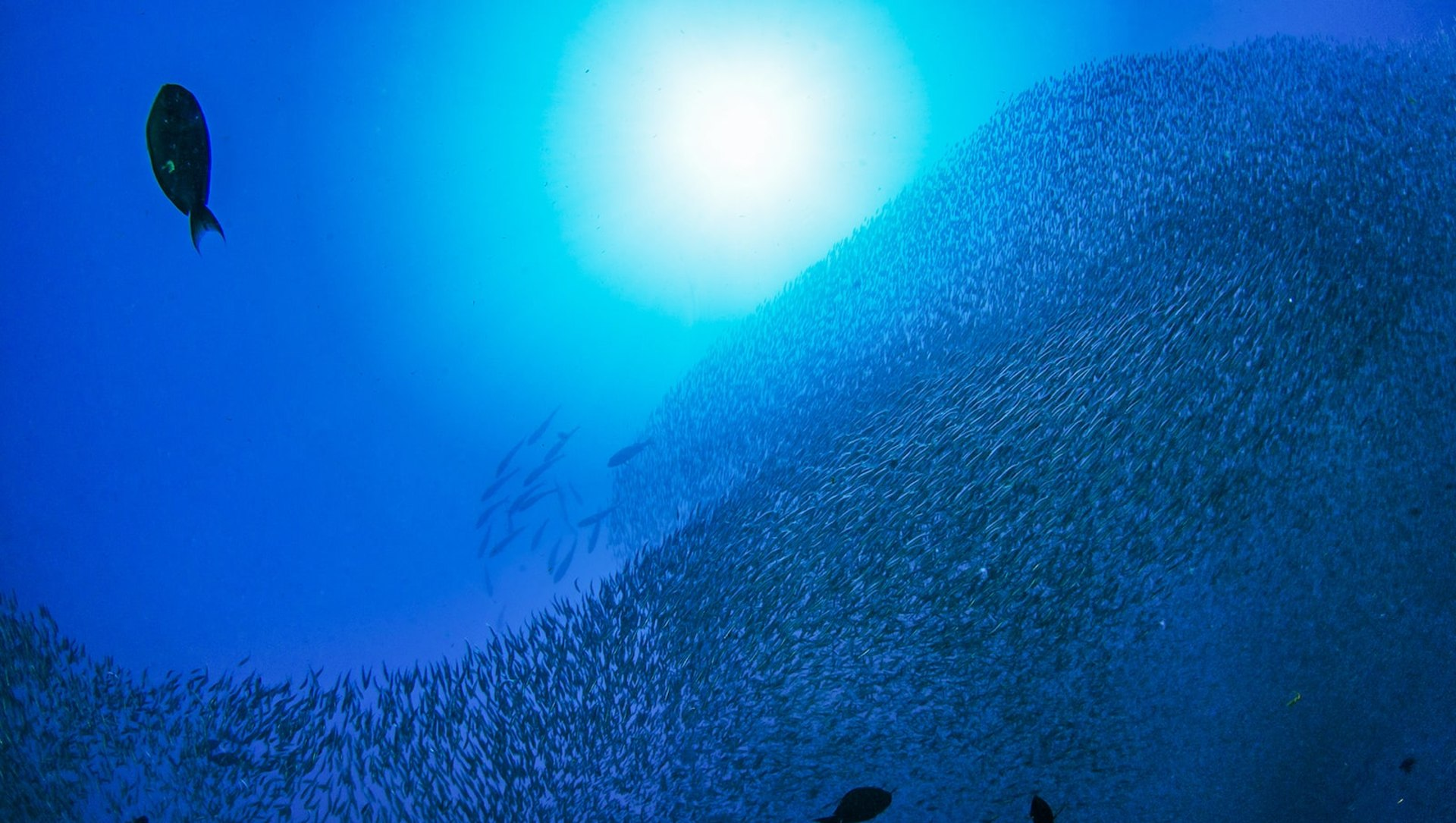 Cracking the Schooling Fish Code: The Andaman story