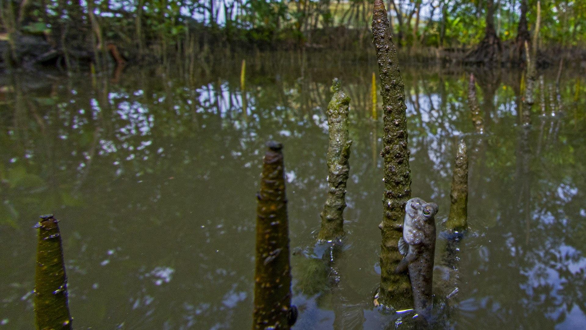 Crawl, Burrow, Swim: Little Champions of the Sundarbans Ecosystem