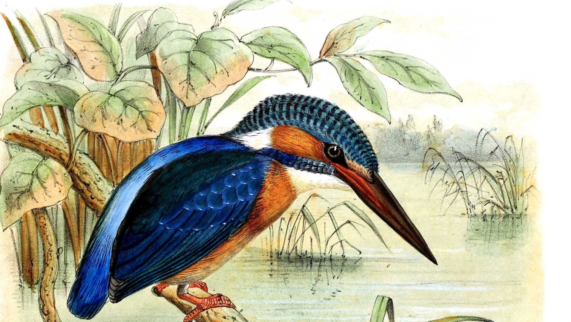 Feathered Folklore: Birds and Their Amazing Avatars