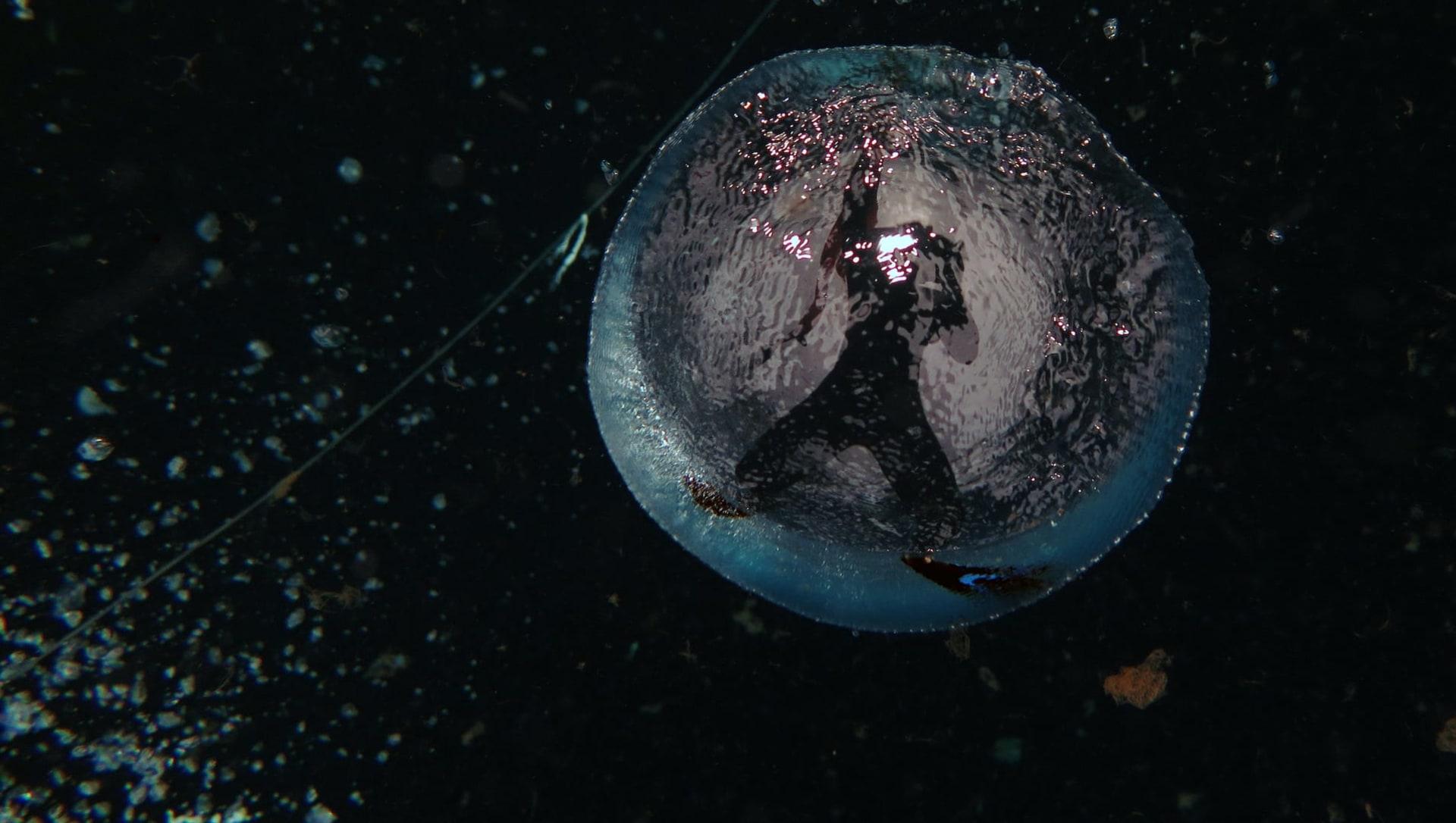 The Zen of Diving