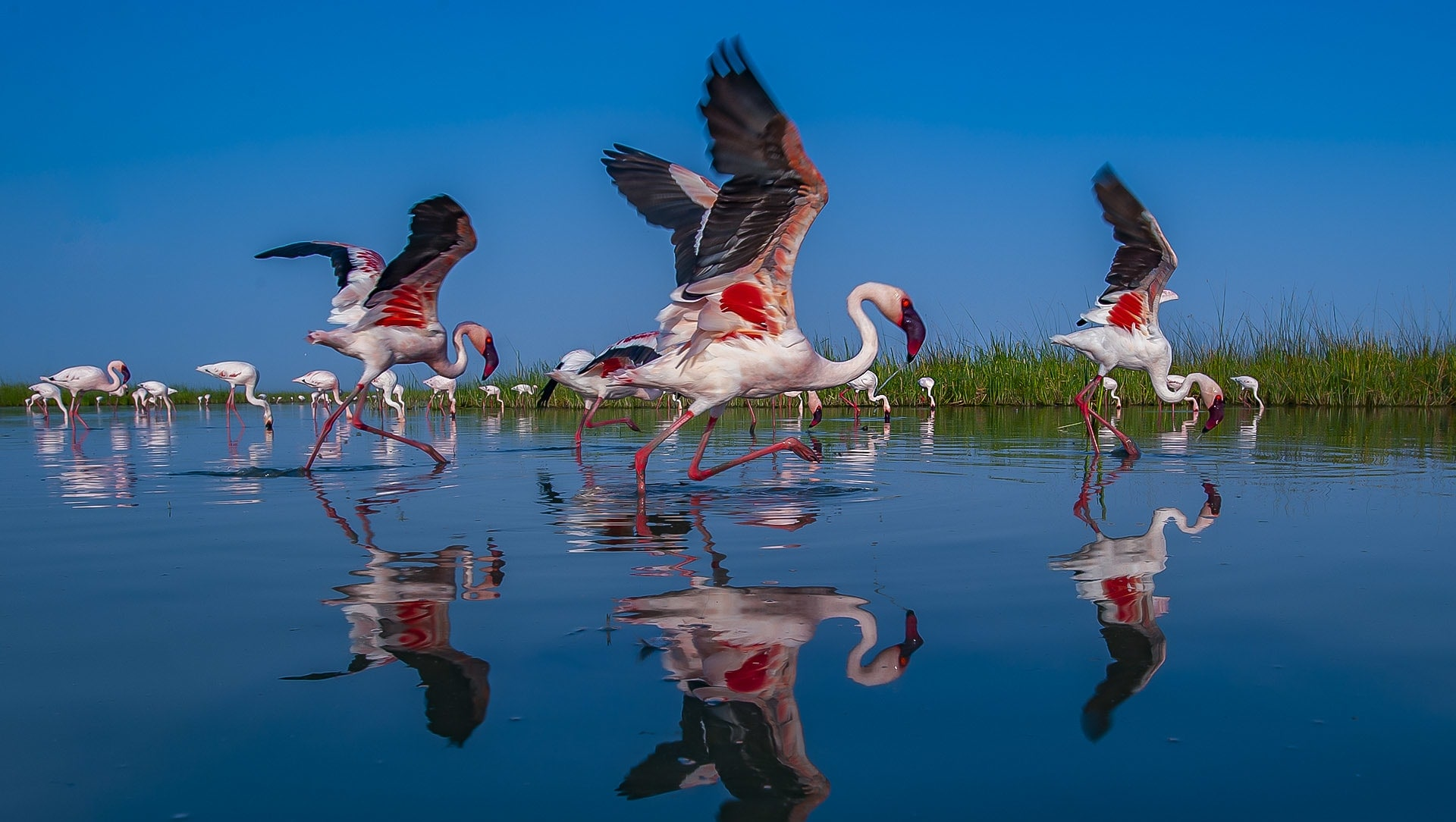 Pink City: When Flamingos take over the Little Rann of Kutch