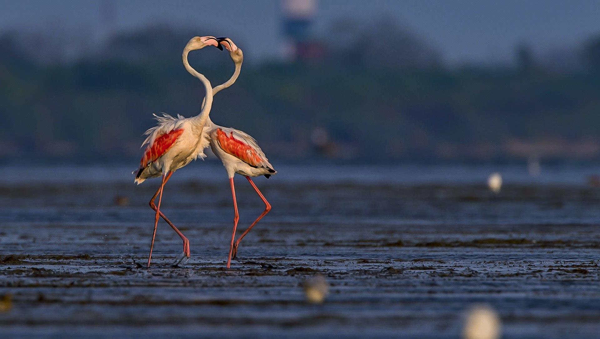 Frabjous Flamingos: Haughty Ballerinas of the Wetlands