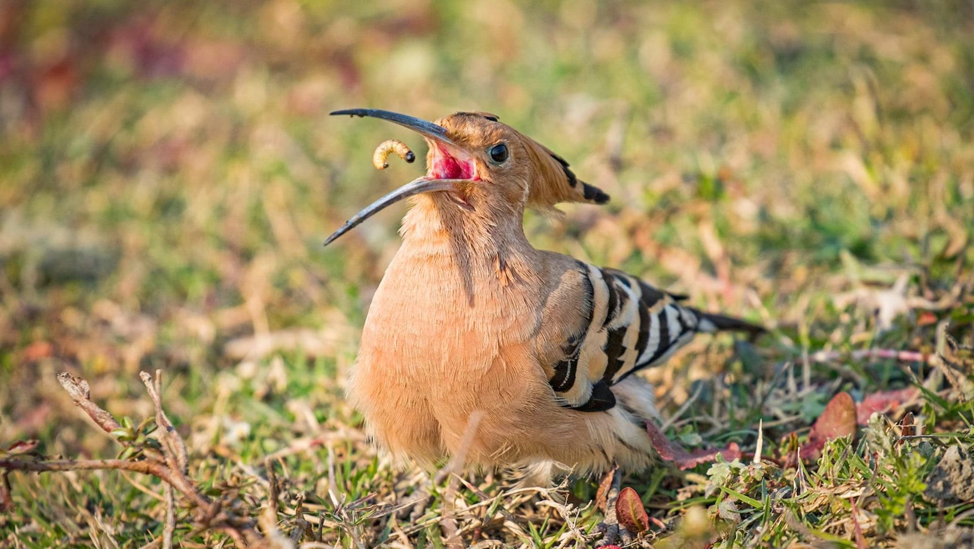 The Guide: Lakh Bahosi Bird Sanctuary
