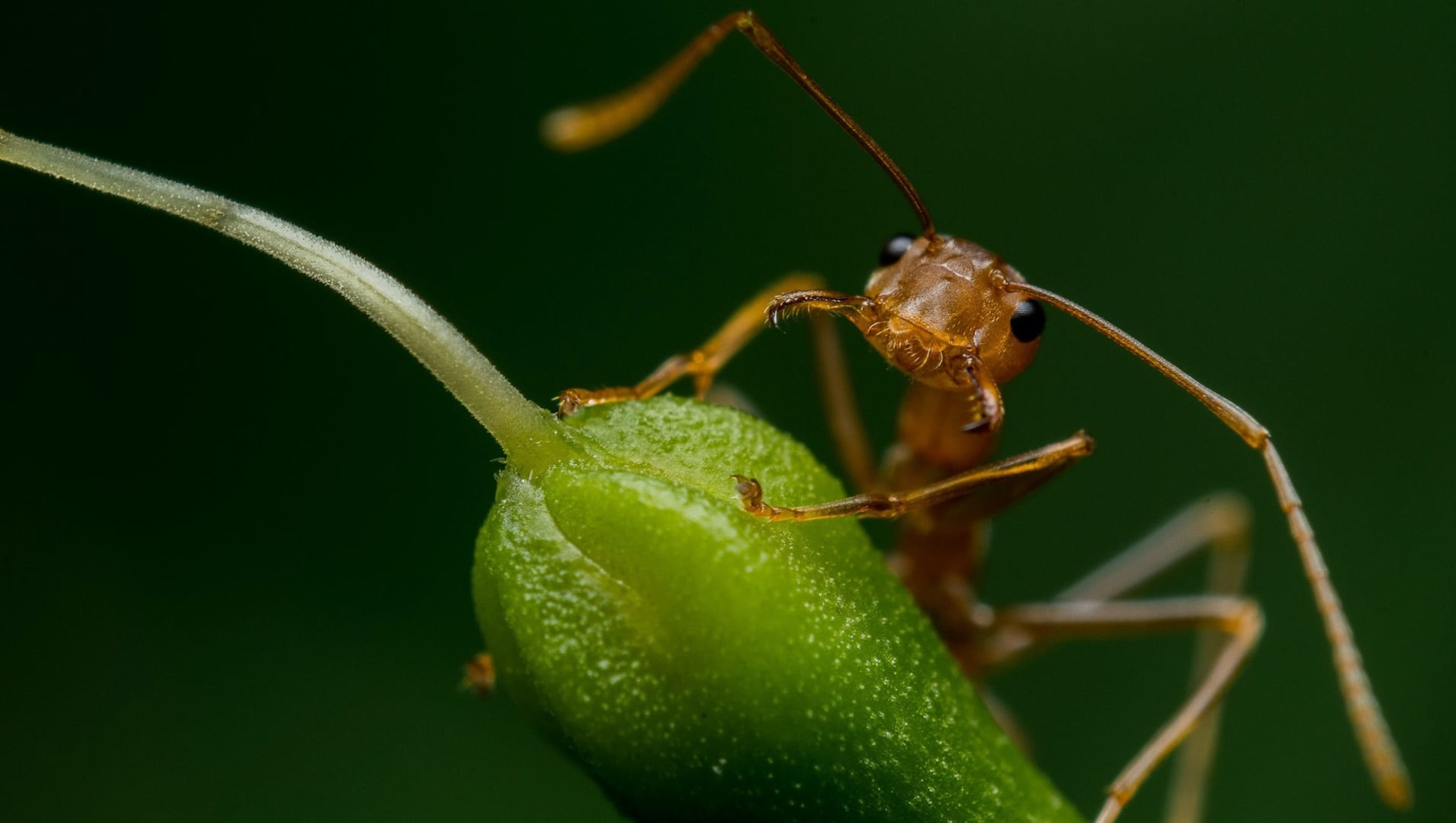 A Bug's Life: The Ant Question Hour