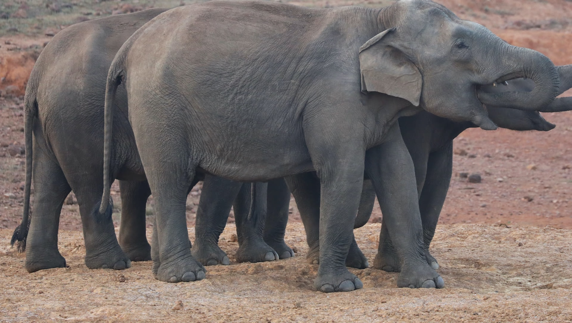 Winds of Change: New Strategies to Combat Human-Elephant Conflict