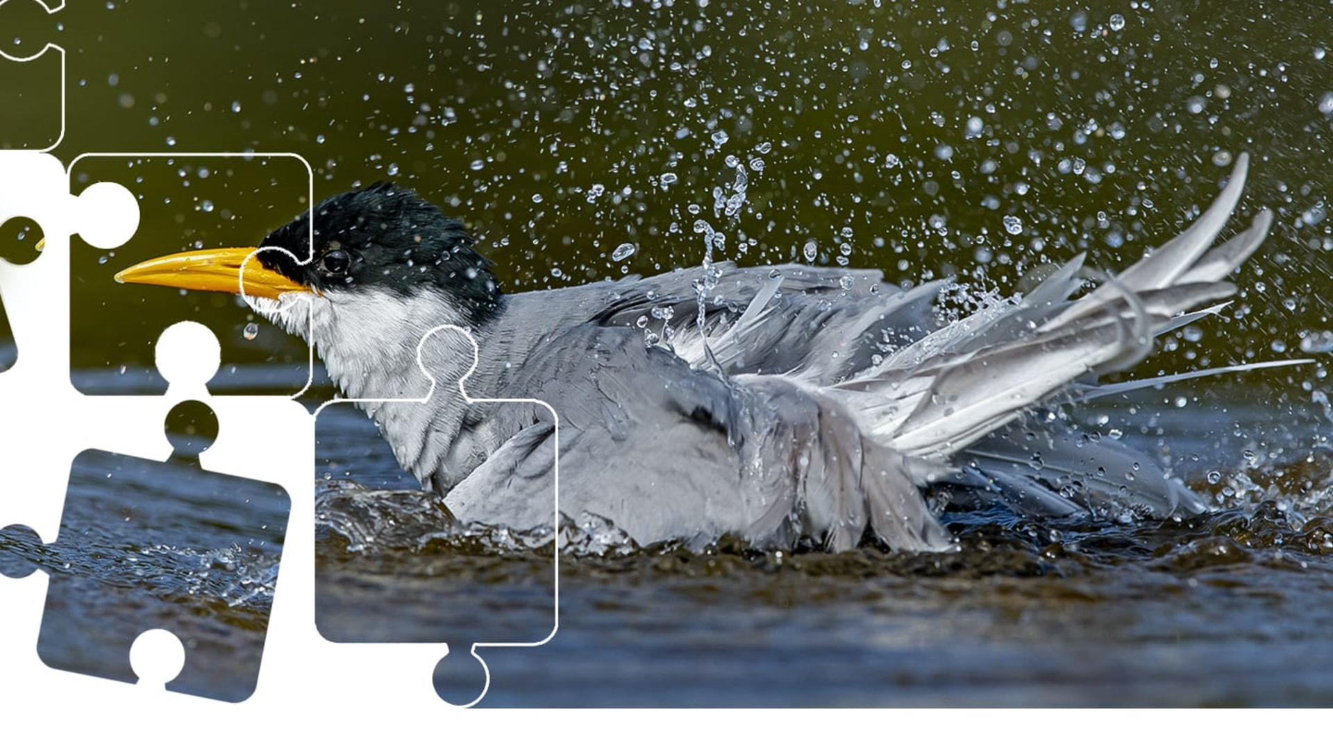 Wildlife Puzzle: River Tern