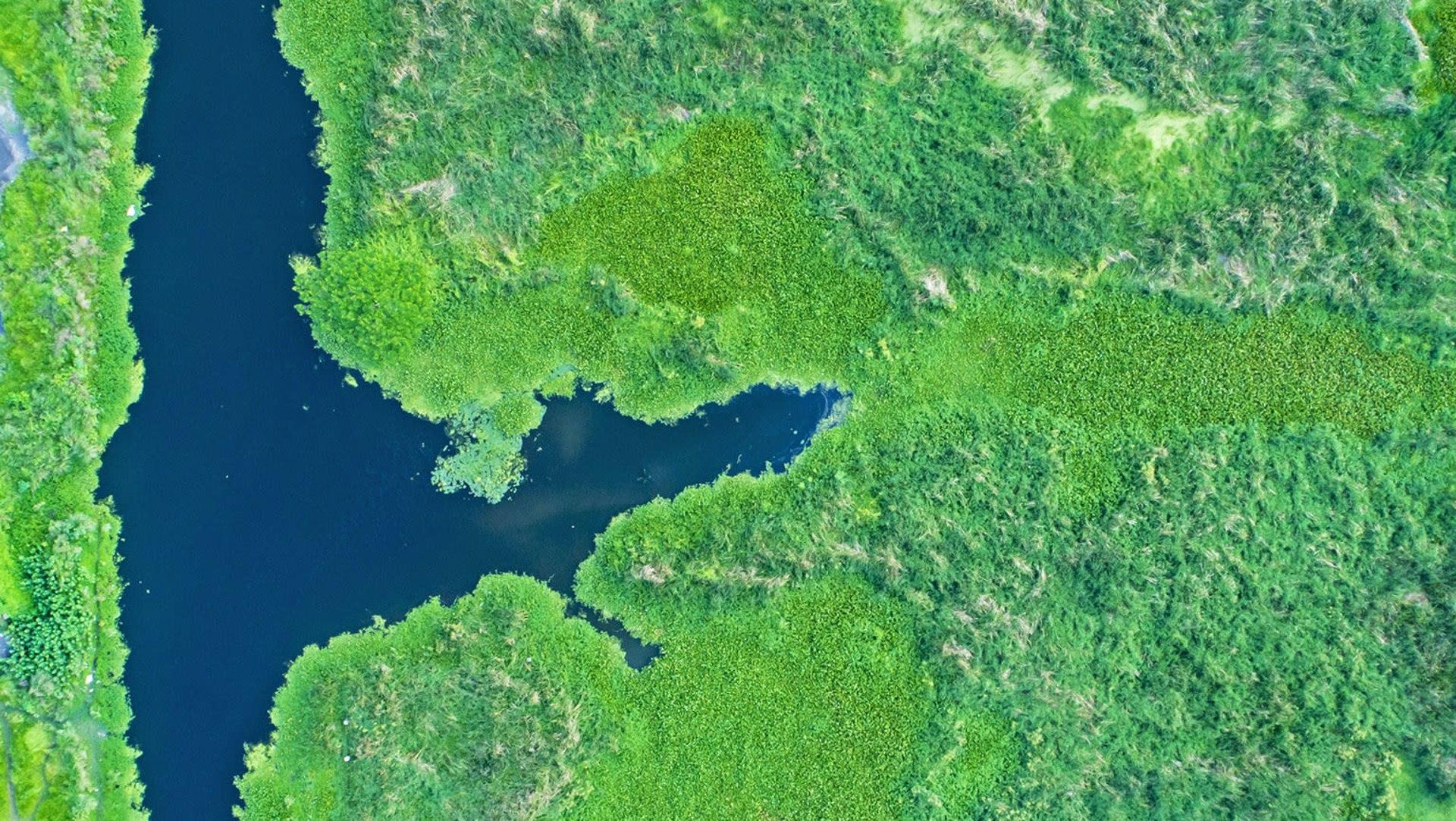 Quiz: The Wetlands