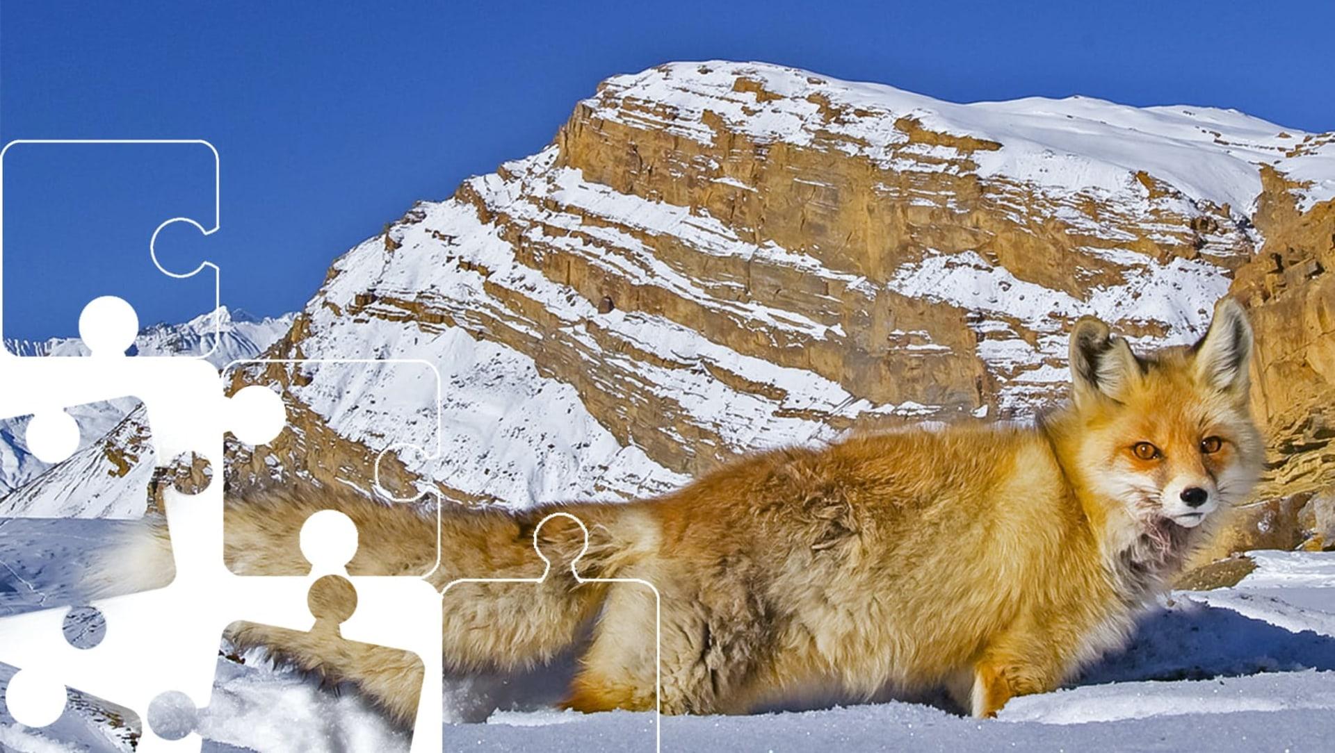 Wildlife Puzzle: Red Fox