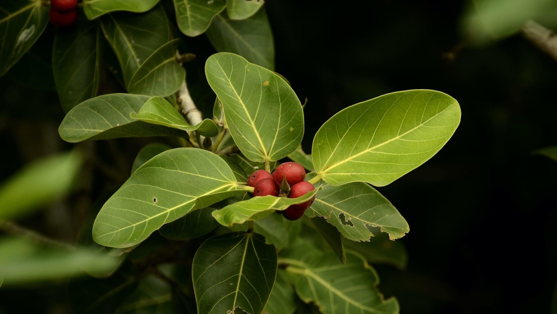 Cherish the Grove: A Foray into the Forests of the Coromandel Coast