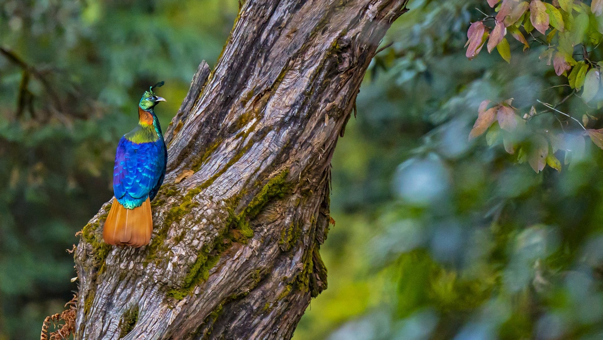 Winged Wonders of Uttarakhand