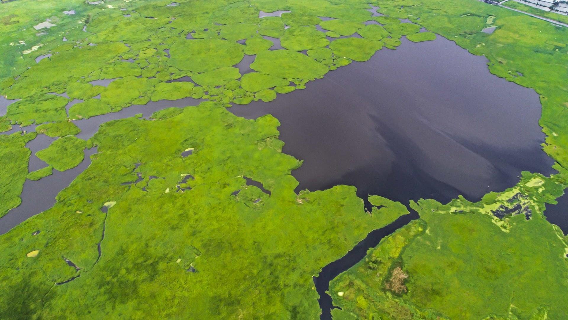 The Vanishing Grasslands and Wetlands of India