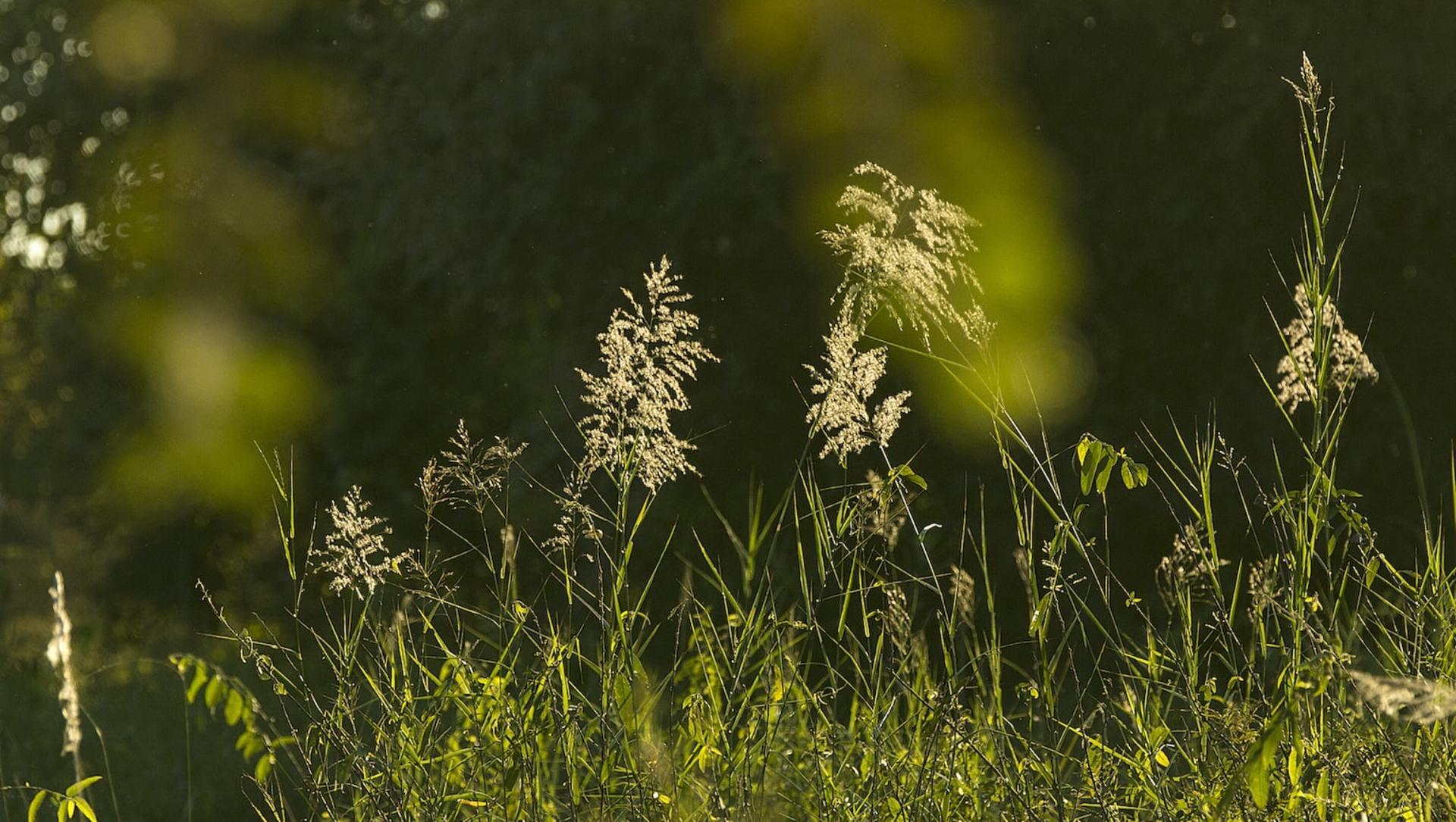 Grasslands: Importance, Types, Threats