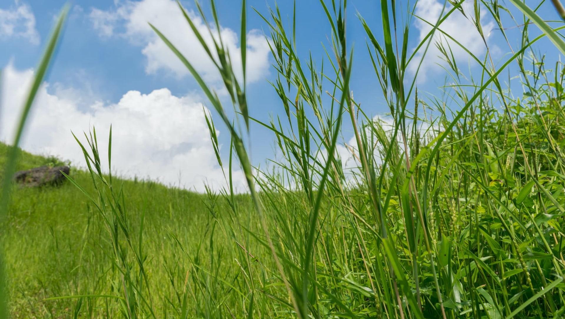Droughts mitigated at Lamkani through grassland restoration