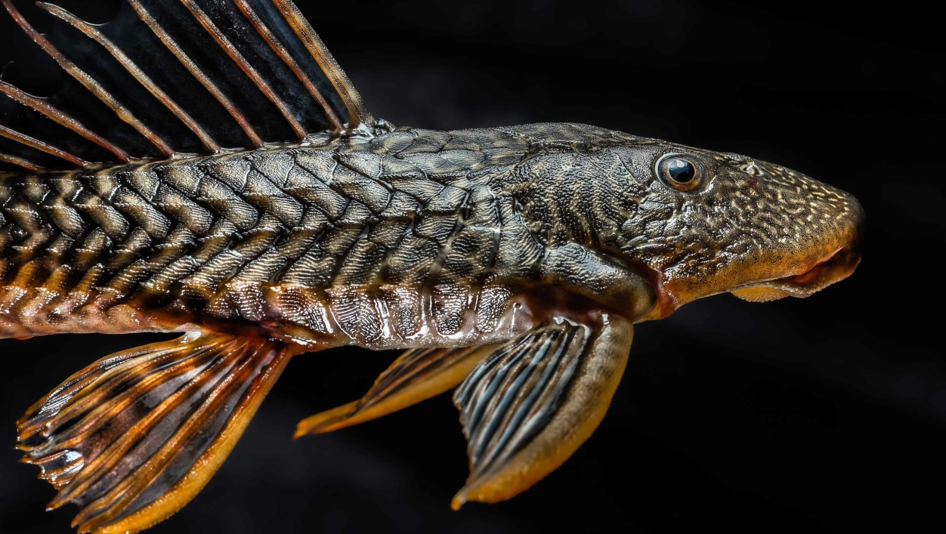 Alien Fish Proliferate as Extreme Climate Events Rise