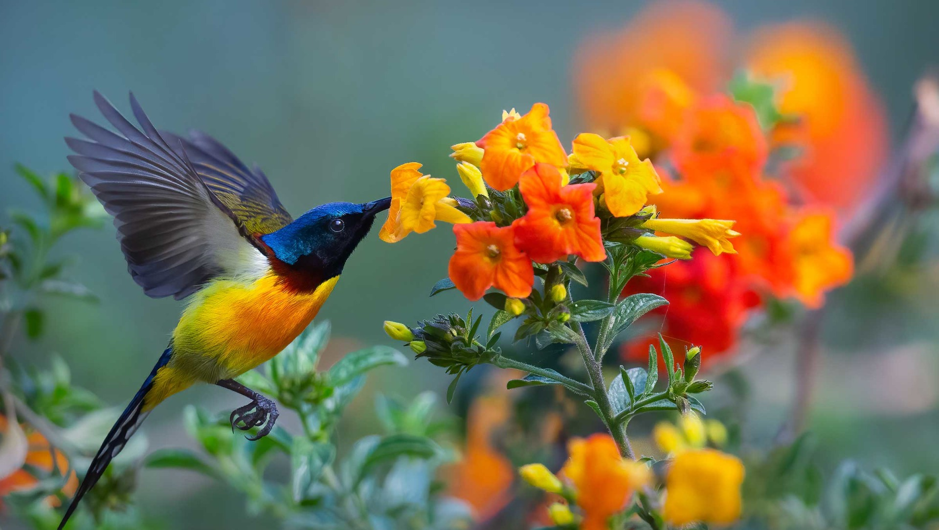 For Love of Nectar: The Dazzling Sunbirds of India