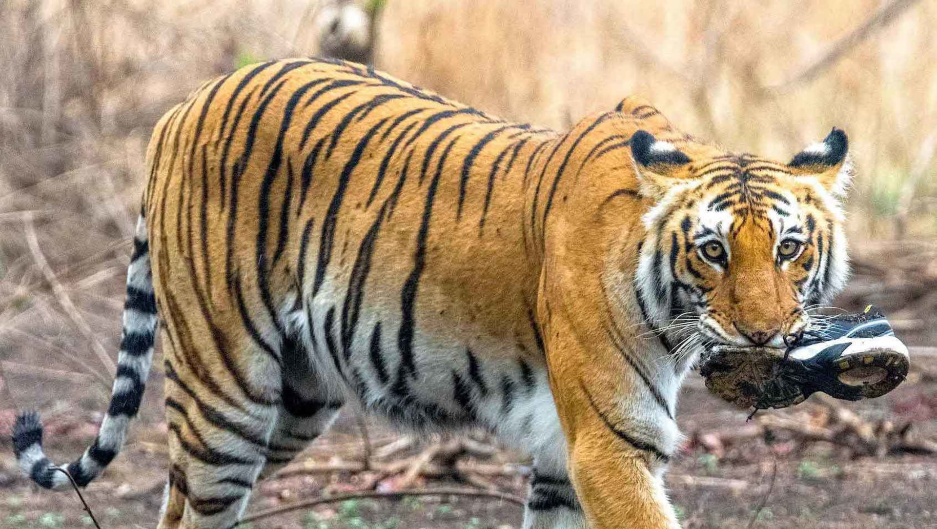In Our Filth: When Wild Animals Forage in Polluted Habitats