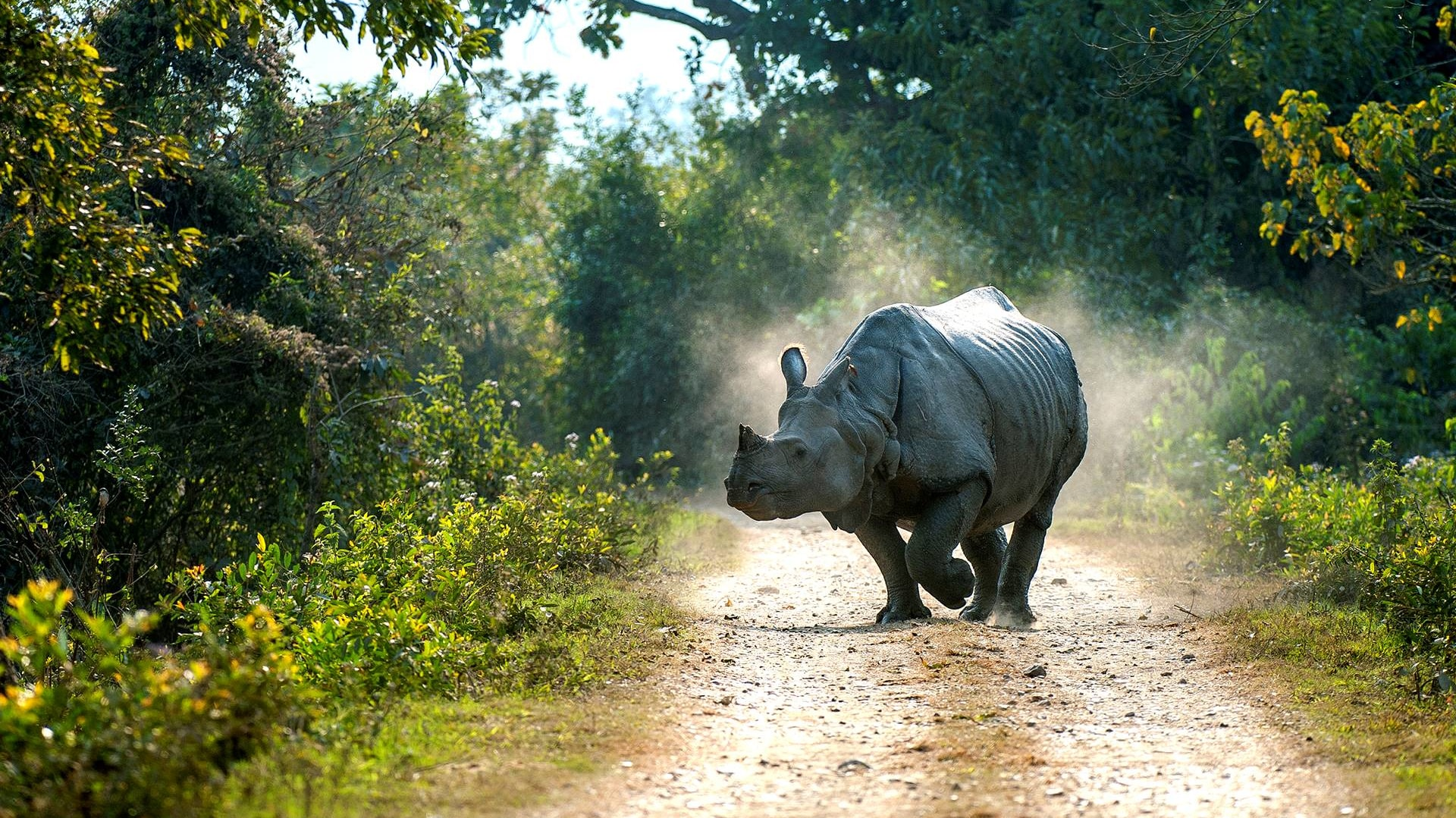 India's Prehistoric Unicorns: The Rhinos of Kaziranga