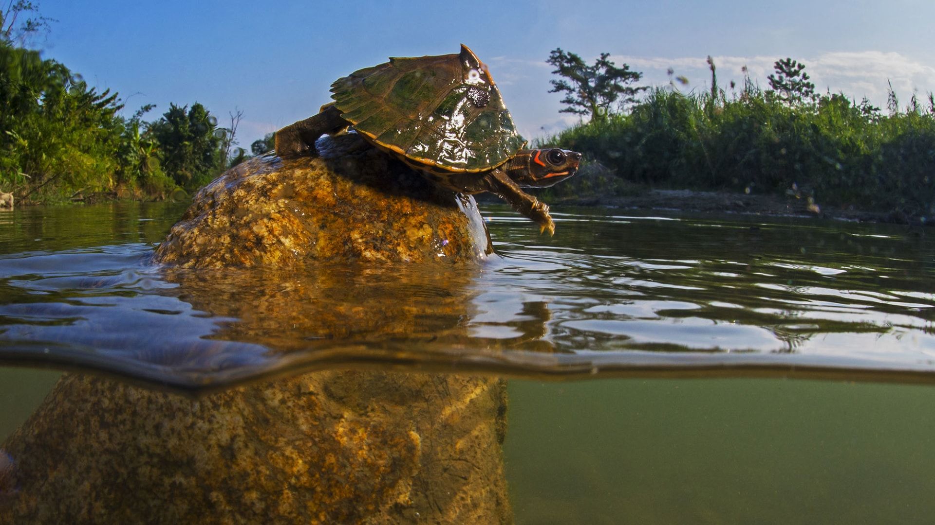 Turtle Trouble on the Brahmaputra