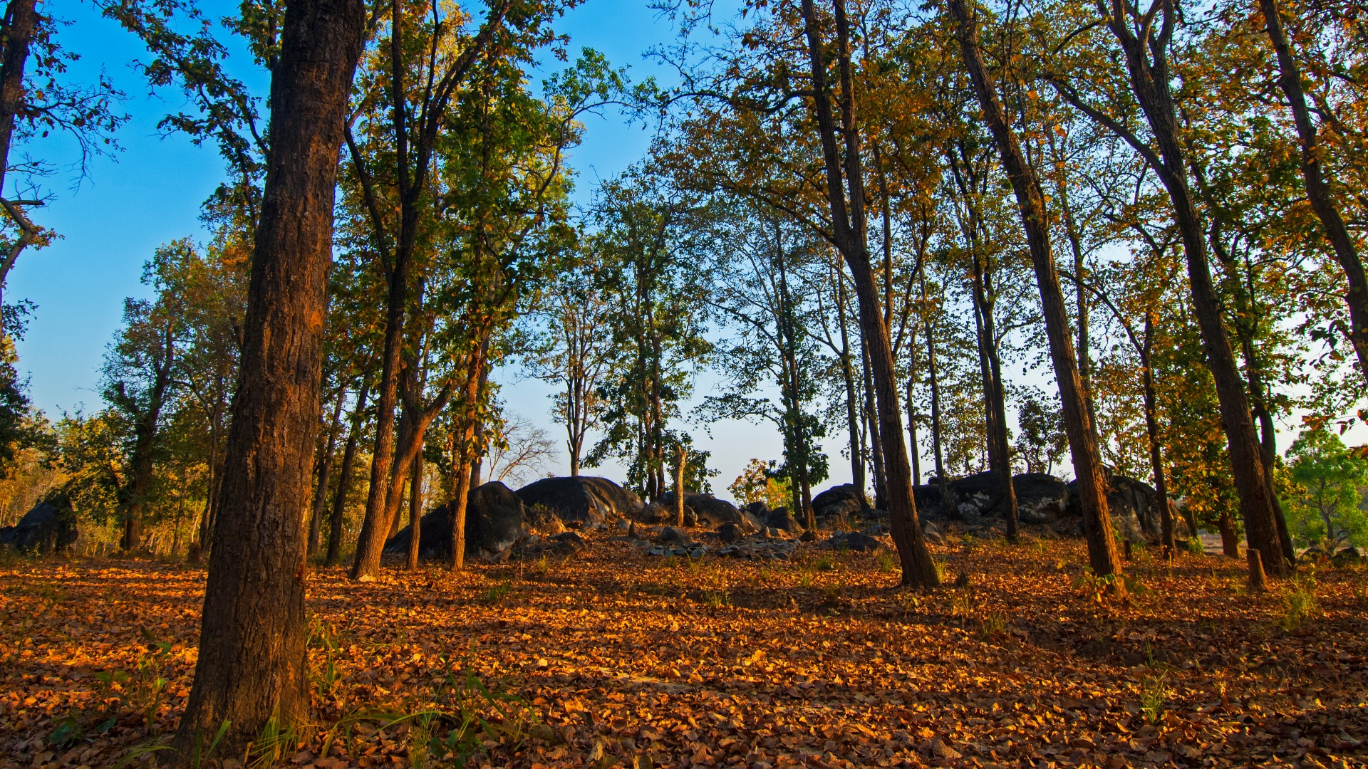 The Guide: Kanha National Park