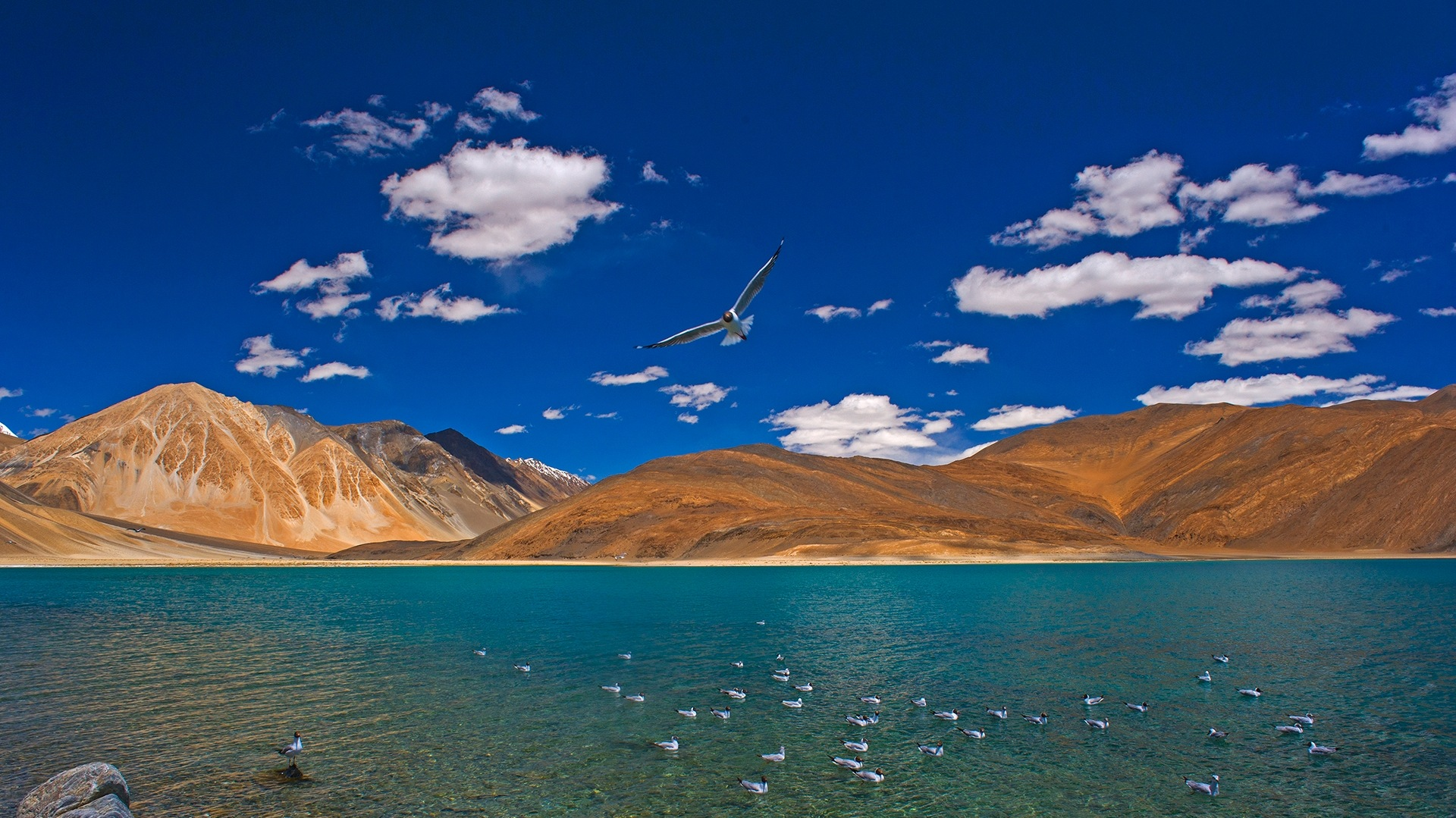 The Guide: Changthang Wildlife Sanctuary