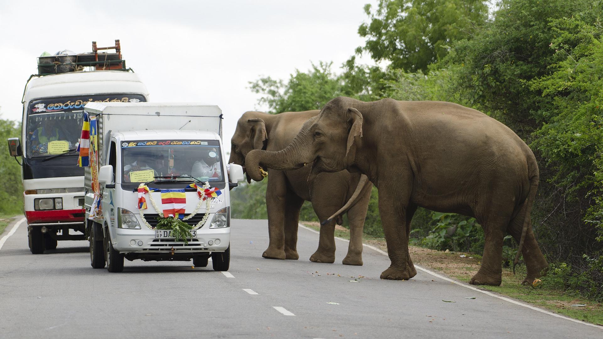 Problem Elephant or Elephantine Problem?