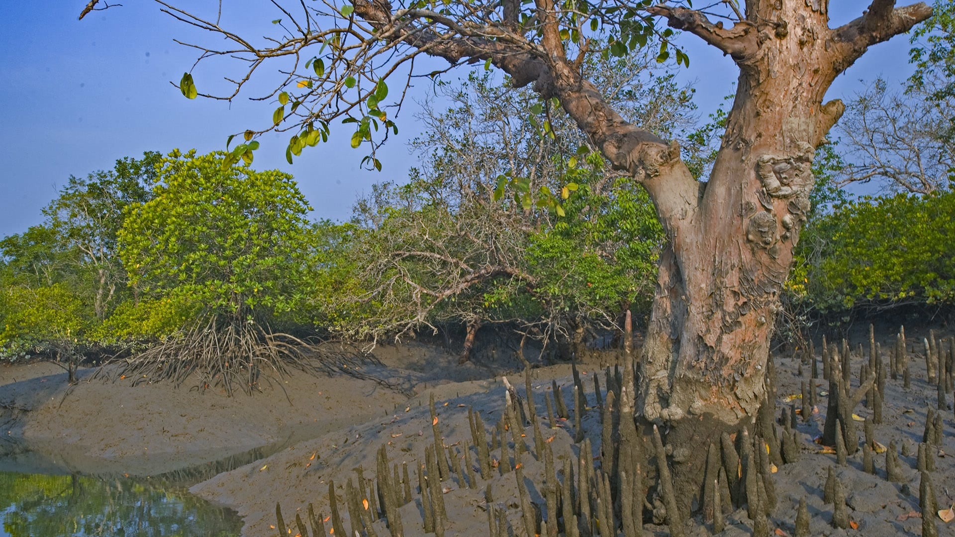 Sultry Sundarbans: The Tide, the Forest, and the Tiger Goddess