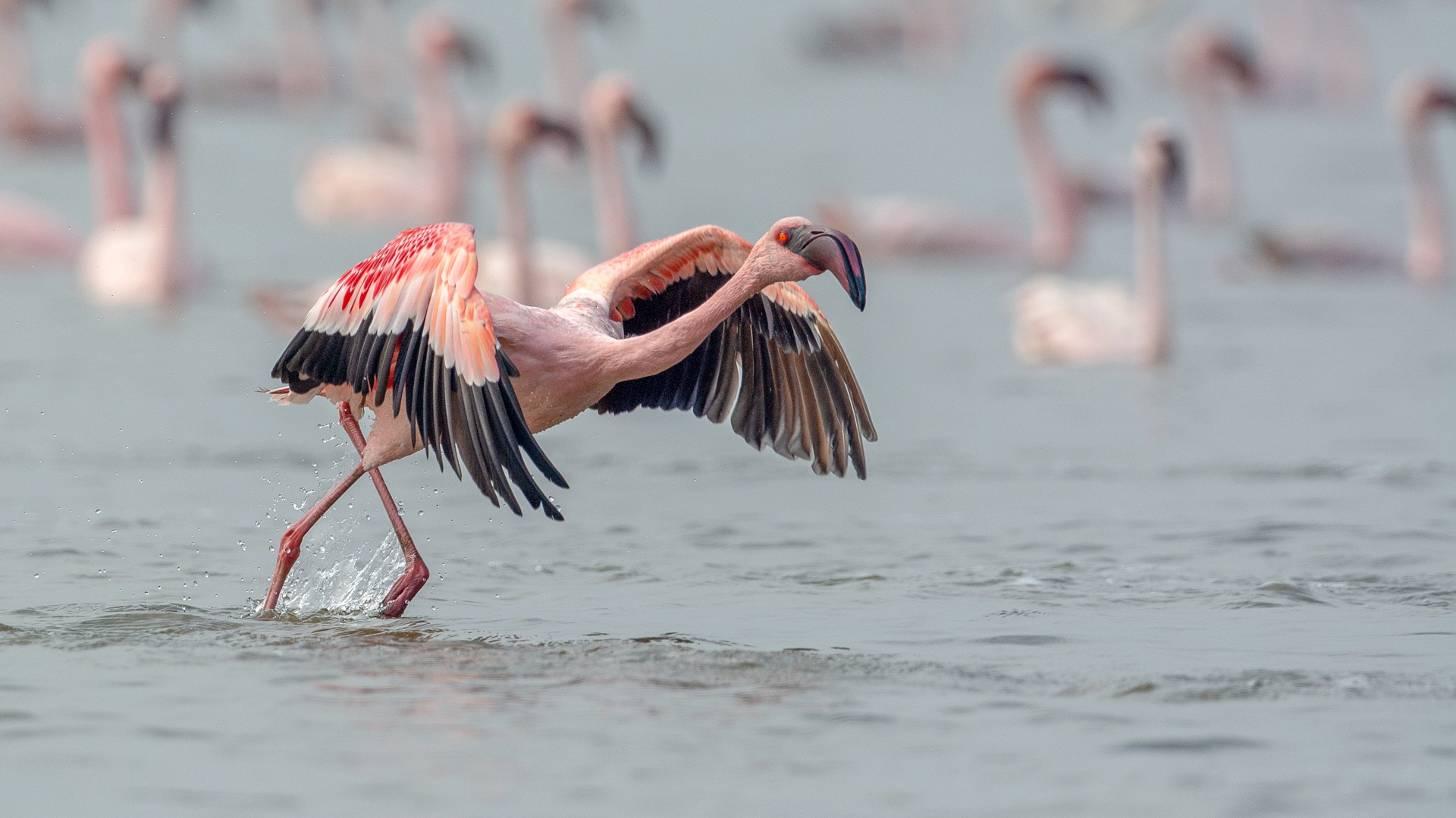 The Flamboyance of Maximum City at Thane Creek Flamingo Sanctuary