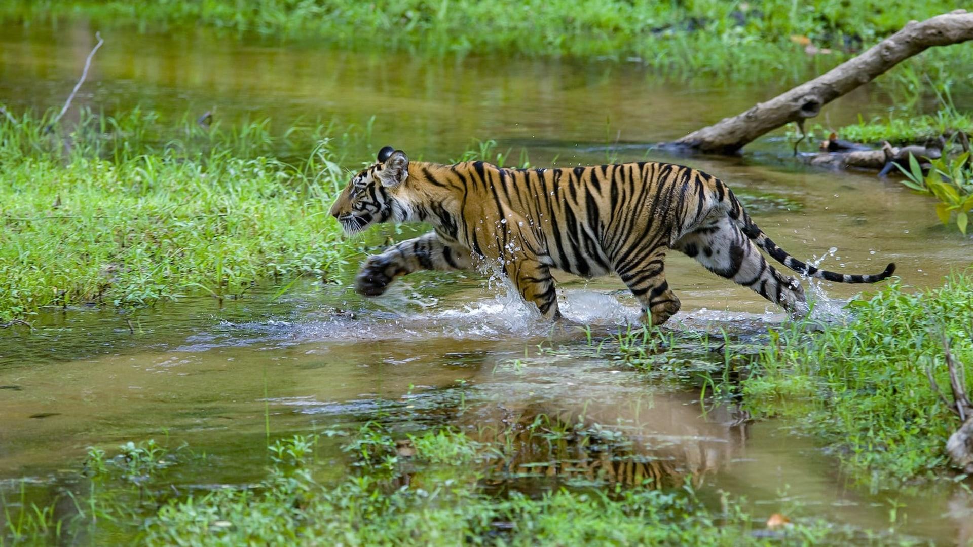 The Guide: Bandhavgarh National Park