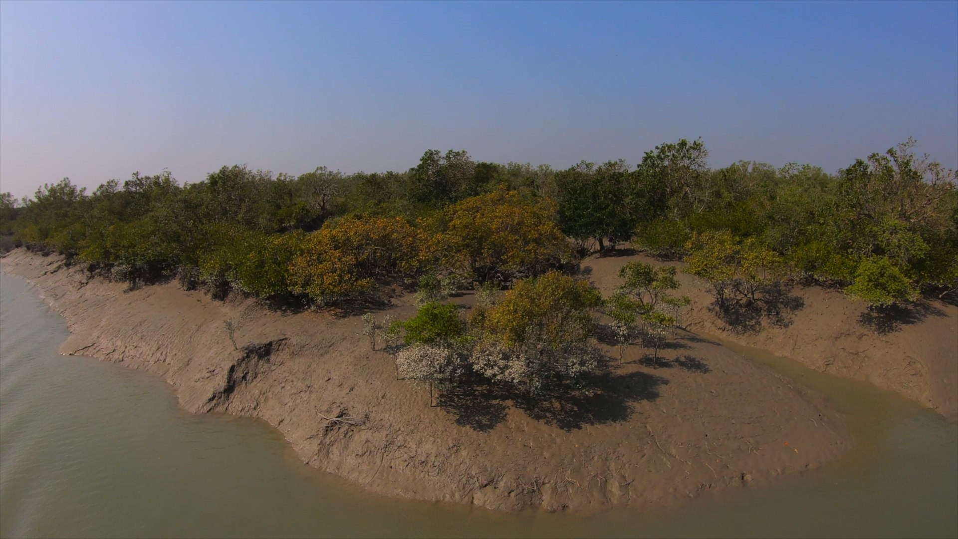 Why We Need the Sundarbans Mangroves More than Ever