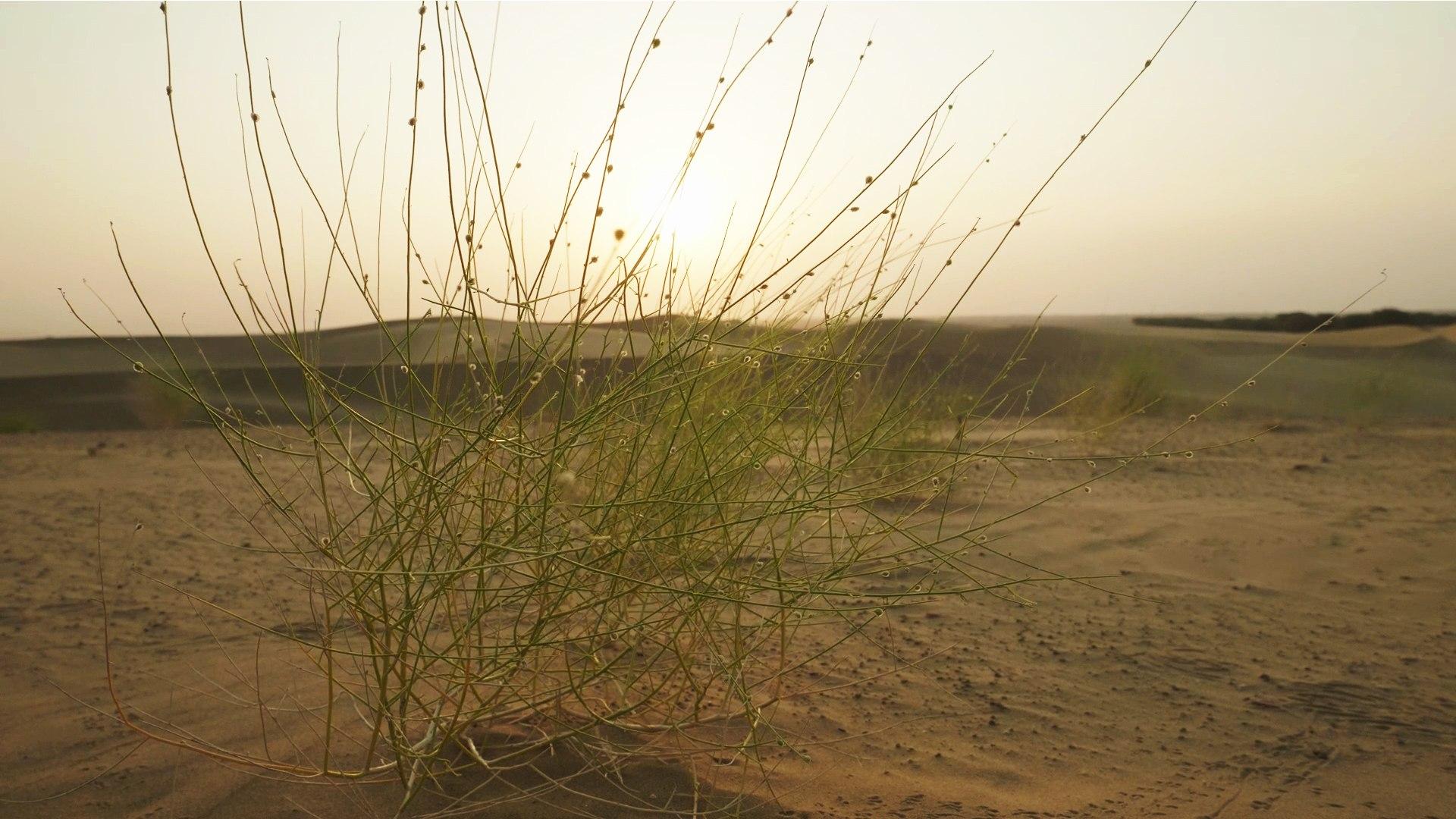 Thar: The Secret Lives of a Harsh Desert