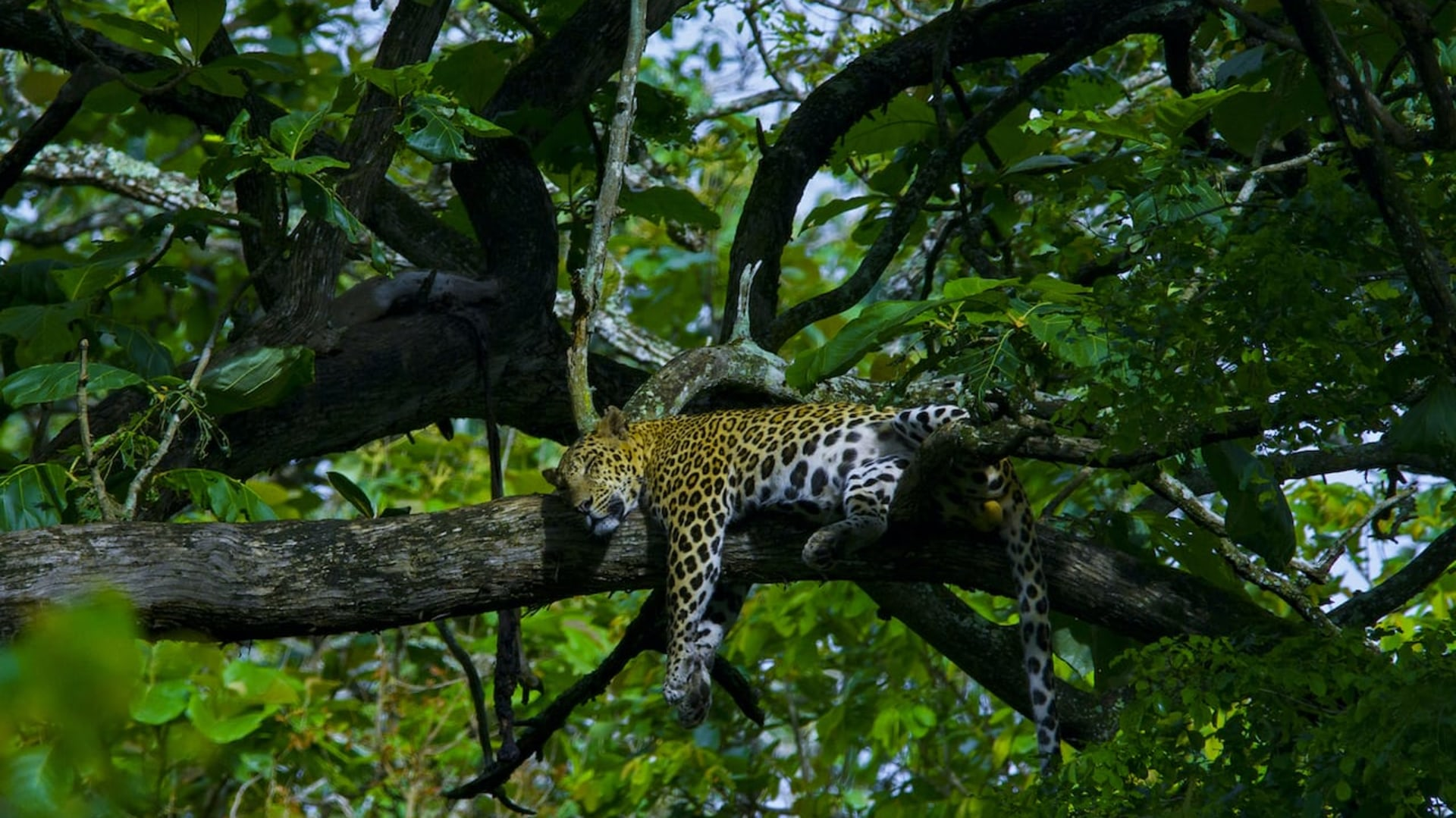 How to Savour a Forest: Gratitude for the Abundance of Nagarhole National Park