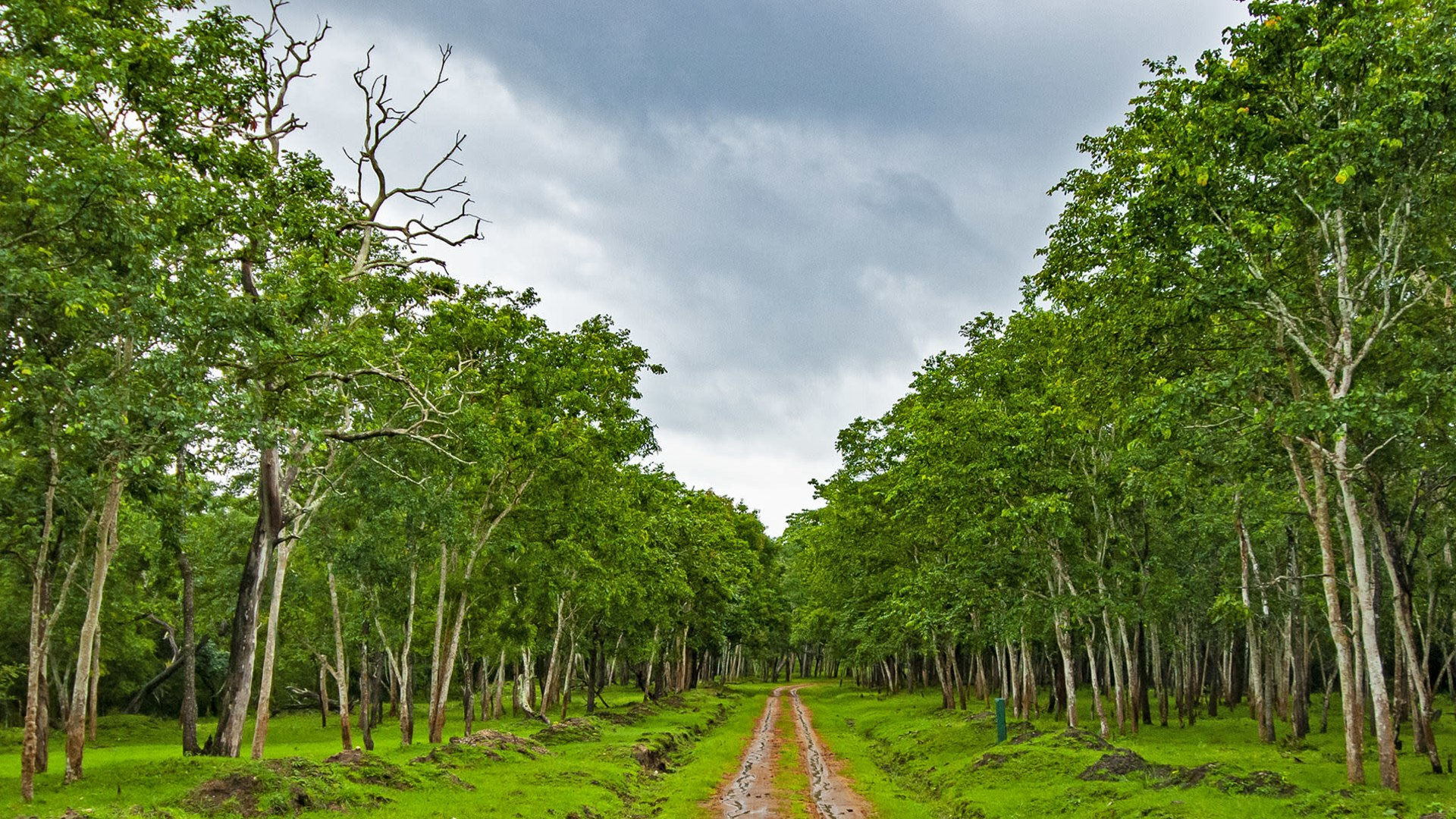 Tall Tales: Trees from Nagarhole