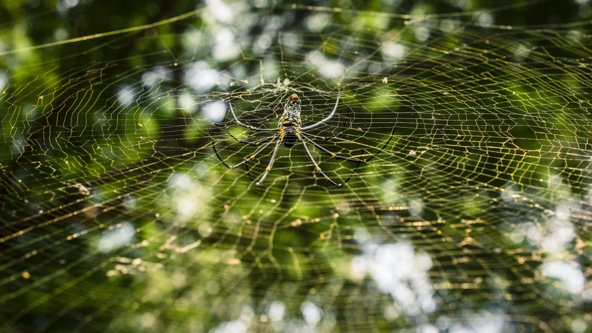 Web Design: An Orb-weaver's Sticky Toxic Lair