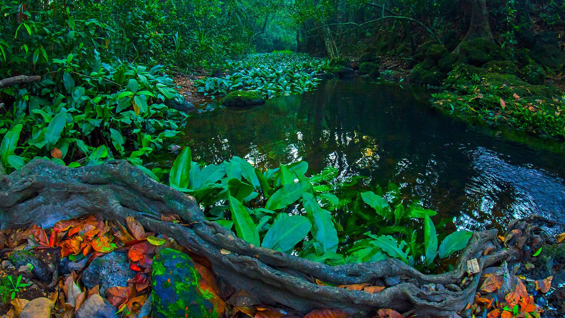 Anatomy of Rainforest: Life on the Floor