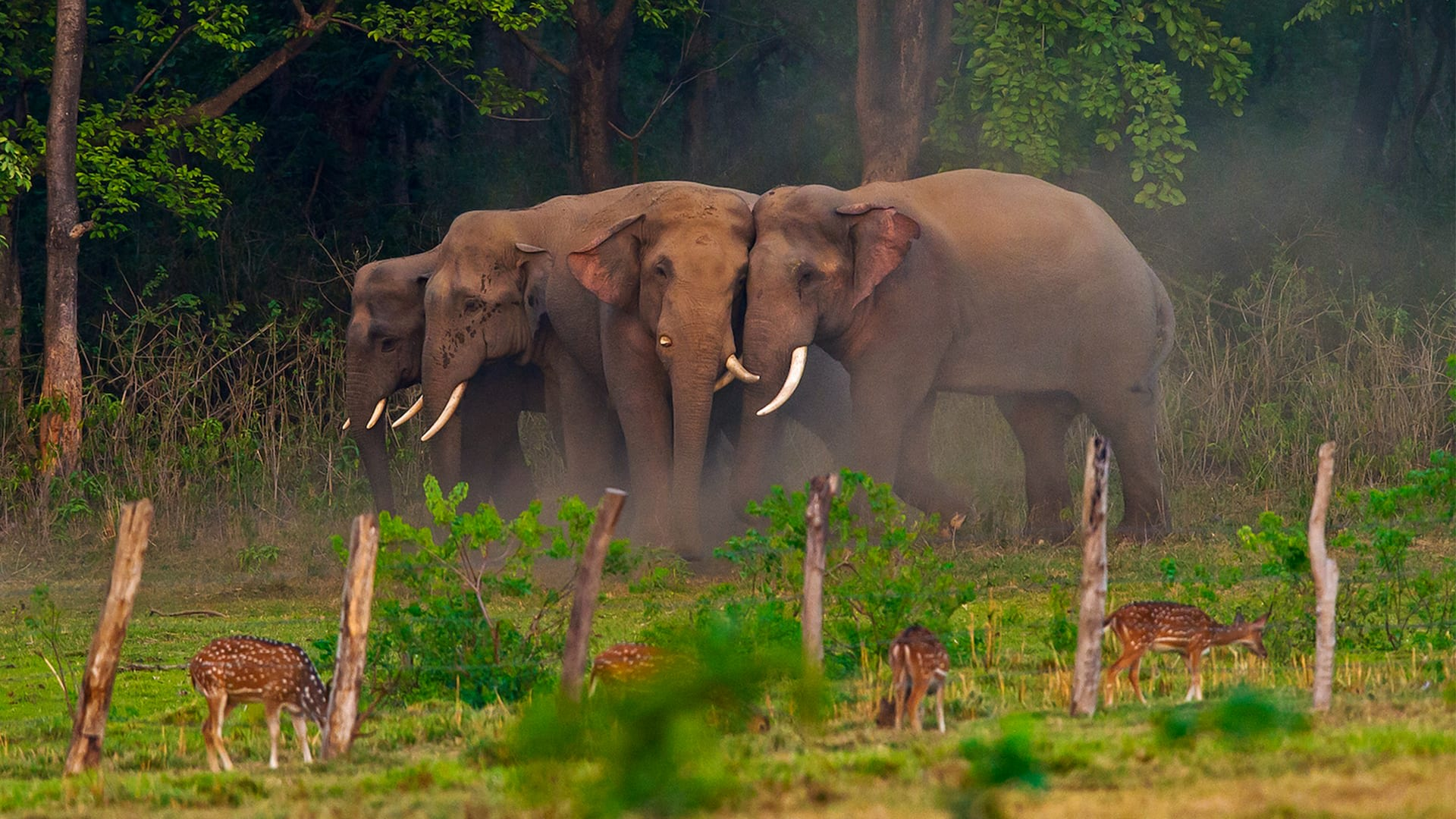 A Family Affair: How Elephants Build Intimate Social Relationships