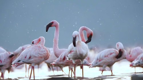 A Study in Pink: The Flamboyant Flamingos of Kutch