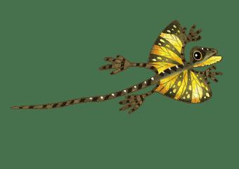 Southern flying lizard
