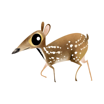 Indian spotted chevrotain