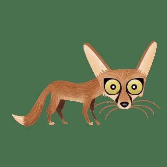 Indian desert fox