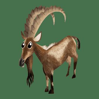 Asiatic ibex