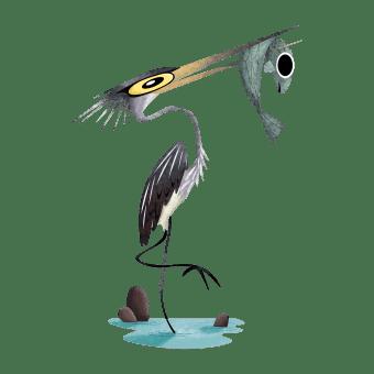 White-bellied heron