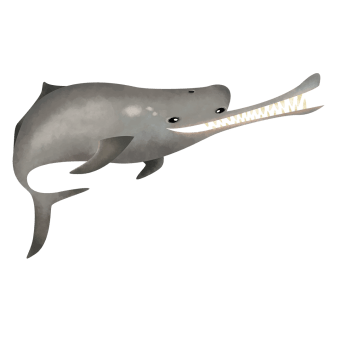 Ganges river dolphin
